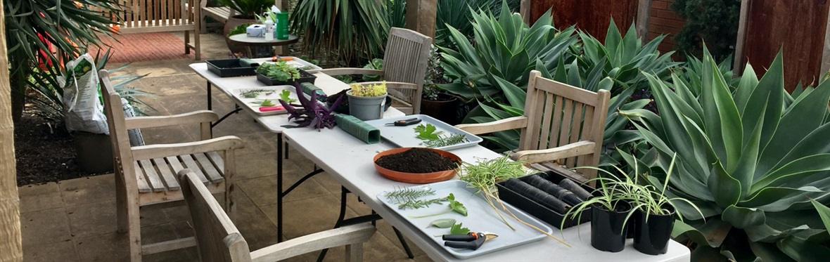 Horticulture therapy program at RTRC
